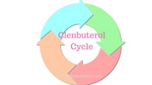 Clenbuterol Cycle – How to use Clen to get maximum output?